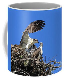 Osprey Chicks Ready To Fledge Coffee Mug
