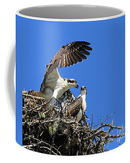 Osprey Chicks Ready To Fledge Coffee Mug