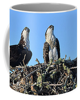 Osprey Family Coffee Mug