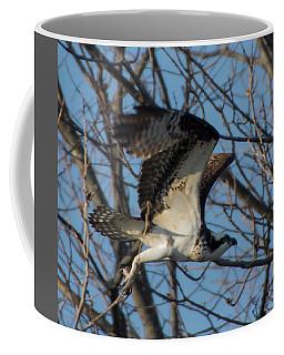 Osprey Flight In Tree Coffee Mug