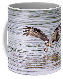 Coffee Mug featuring the photograph Osprey Going For Breakfast by Lori Coleman