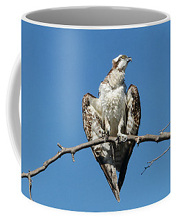 Osprey Heart Coffee Mug by Fraida Gutovich