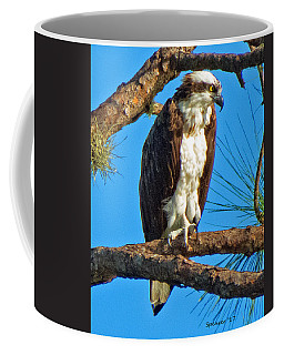 Osprey In Pine Coffee Mug