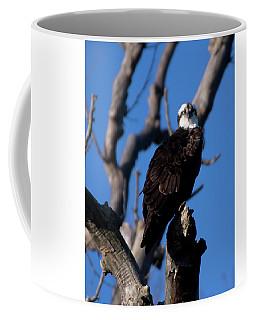 Osprey In Tree 2017 Coffee Mug