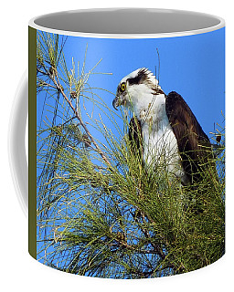 Osprey In Tree Coffee Mug