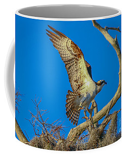 Osprey Landing On Branch Coffee Mug