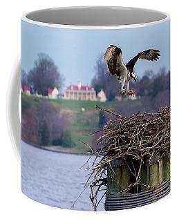 Osprey Mount Vernon  Coffee Mug