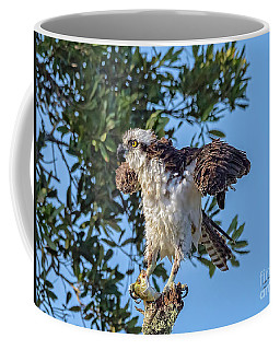 Osprey With Meal Coffee Mug