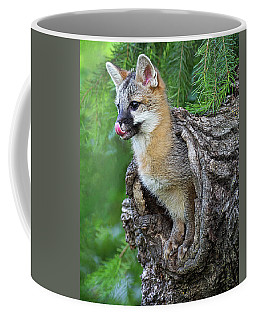 Out Pops A Gray Fox Coffee Mug