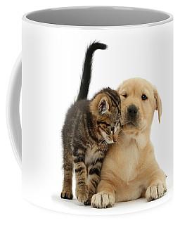 Over Friendly Kitten Coffee Mug