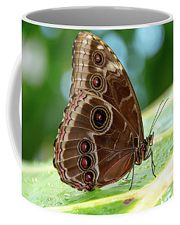 Owl Butterfly Coffee Mug