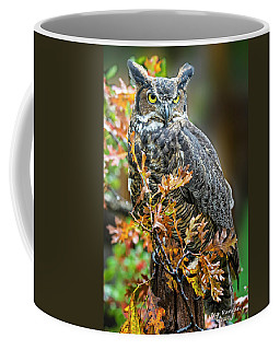 Owl In Autumn Oaks Coffee Mug