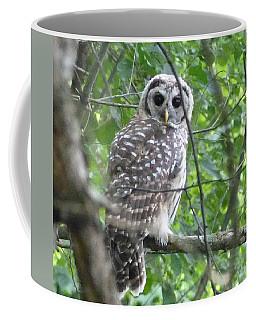 Owl On A Limb Coffee Mug by Donald C Morgan