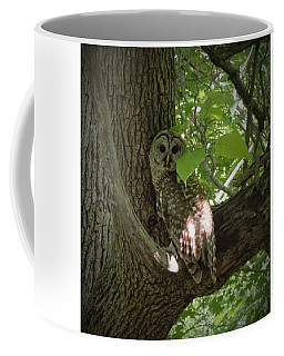 Owl With Leaf Coffee Mug