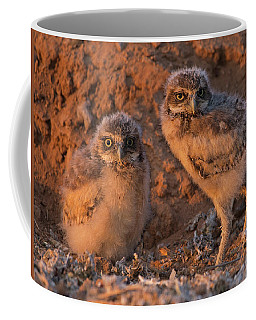 Owlet Siblings Coffee Mug by Sue Cullumber