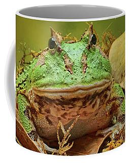 Coffee Mug featuring the photograph Pac Man - Frog by Nikolyn McDonald