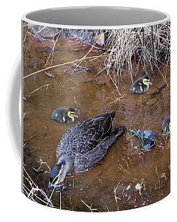 Coffee Mug featuring the photograph Pacific Black Duck Family by Miroslava Jurcik
