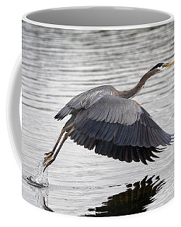 Pacific Great Blue Heron On Lift Off Coffee Mug