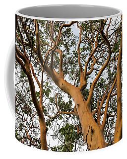 Pacific Madrone Trees Coffee Mug