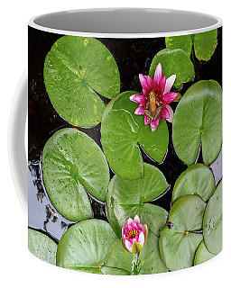 Pacific Tree Frog On Water Lily Flower Aerial View Coffee Mug