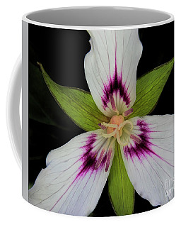 Painted Trillium Coffee Mug by Barbara Bowen