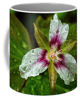 Coffee Mug featuring the photograph Painted Trillium With Raindrops by Thomas R Fletcher