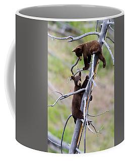 Pair Of Bear Cubs In A Tree Coffee Mug