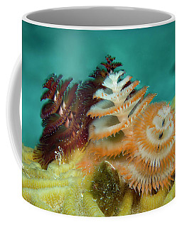 Coffee Mug featuring the photograph Pair Of Christmas Tree Worms by Jean Noren