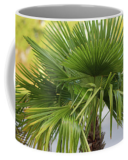 Coffee Mug featuring the photograph Palm Tree Just There by Raphael Lopez