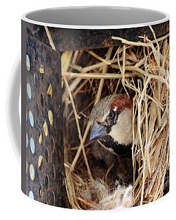 Papa Bird Coffee Mug