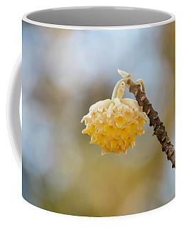 Paperbush Flower Coffee Mug