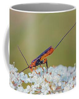 Parasitoid Wasp - Glyptomorpha Pectoralis Coffee Mug