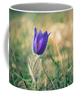 Pasque Flower Coffee Mug