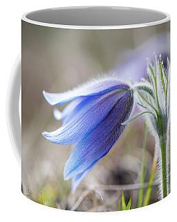 Pasque Flower's Silver Grey Hair Coffee Mug