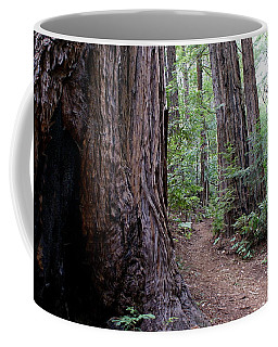 Pathway Through A Redwood Forest On Mt Tamalpais Coffee Mug