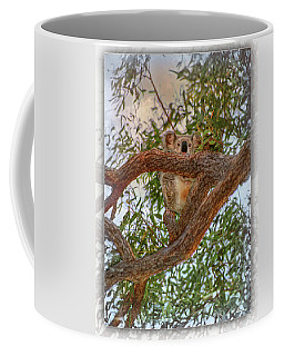 Coffee Mug featuring the photograph Patience Brings Koalas by Hanny Heim