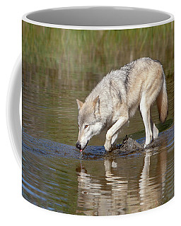 Coffee Mug featuring the photograph Pause In The Action by Jack Bell