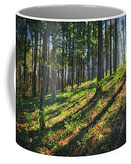 Peaceful Forest 4 - Spring At Retzer Nature Center Coffee Mug by Jennifer Rondinelli Reilly - Fine Art Photography