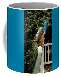Coffee Mug featuring the photograph Peacock On A Fence by Jean Noren