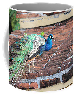 Peacock On Rooftop Coffee Mug