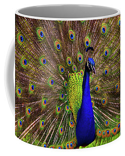 Coffee Mug featuring the photograph Peacock Showing Breeding Plumage In Jupiter, Florida by Justin Kelefas