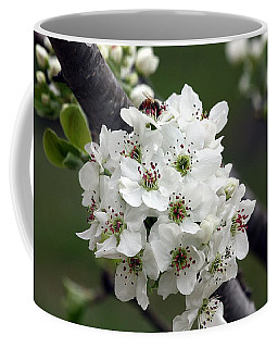 Pear Blossoms In Spring Coffee Mug by Sheila Brown