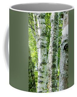 Coffee Mug featuring the photograph Peek A Boo Birch by Greg Fortier