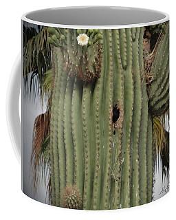 Peek-a-boo Cactus Wren Coffee Mug