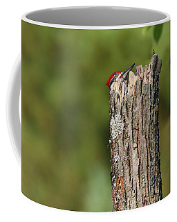 Peek A Boo Pileated Woodpecker Coffee Mug