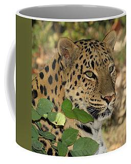 Peek A Boo Kitty Coffee Mug