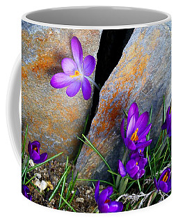 Peek Coffee Mug by Kathryn Meyer