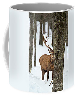 Coffee Mug featuring the photograph Peekaboo.. by Nina Stavlund
