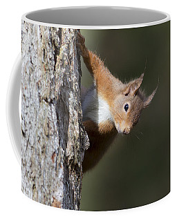 Peekaboo - Red Squirrel #29 Coffee Mug