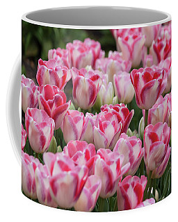 Peppermint Tulip Field IIi Coffee Mug